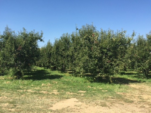 3-old-school-orchard