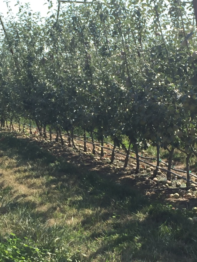 5-new-high-density-trellised-planting